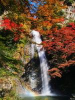 Waterfall of Mino of autumn leaves Stock photo [2234816] Waterfall