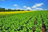 Hokkaido countryside Stock photo [2235234] Field