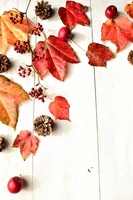Red ivy leaves and pine cones and apples Stock photo [2238674] Ivy