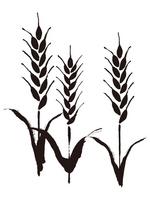 Wheat three Wheat,