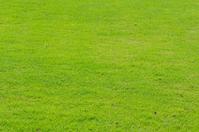 Green turf Stock photo [2240131] Lawn