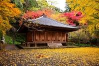 Autumn leaves of national treasure Fuki-ji stock photo