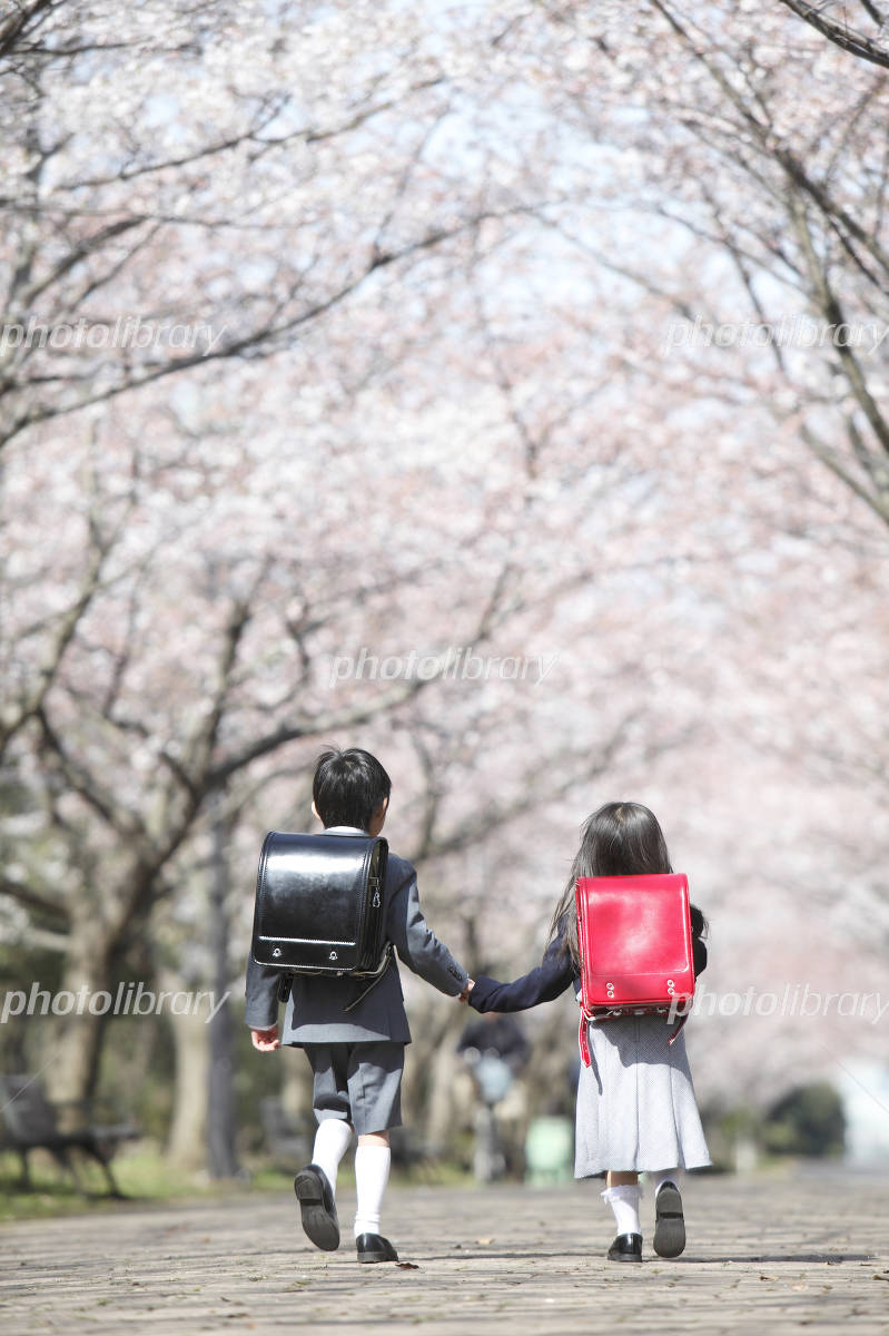 Rear View of elementary school men and women who walk the cherry trees Photo