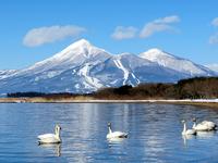 Bandai and Lake Inawashiro and swan Stock photo [2361735] Aizu