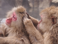 Monkey to grooming Stock photo [2364278] APE