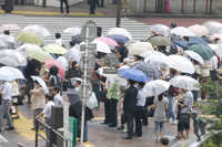People of signal waiting Stock photo [2364401] Japan