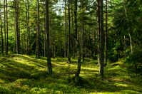Swedish forest Stock photo [2365565] Sweden