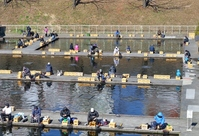 Fishing pond that is crowded with Herabuna fan Stock photo [2366123] Fish