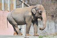 Indian elephant Stock photo [2374239] Elephant