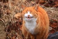 Cat to the Henkao Stock photo [2375564] CAT