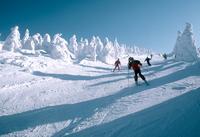 Yamagata Zao ski Stock photo [2375692] Skiing