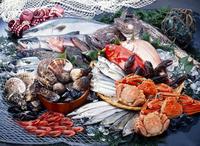 Set of fresh fish Stock photo [2483953] Fish