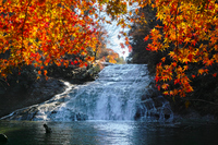 Waterfall of Awamata of autumn leaves Stock photo [2484677] Keikoku