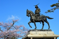 Date Masamune equestrian statue and cherry Stock photo [2486547] Date