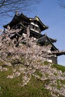 Takada Castle cherry Stock photo [2491986] Takada