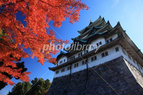 Autumn of Nagoya Castle Photo