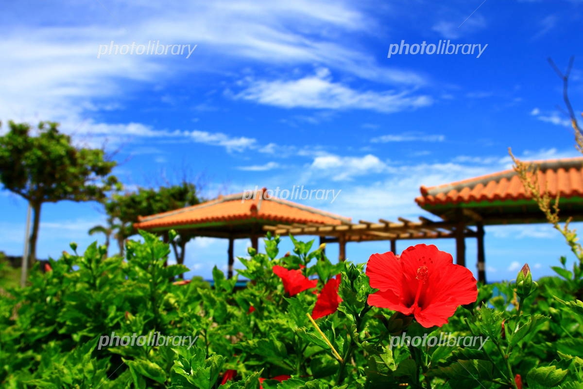 Red hibiscus and red tile roof Photo