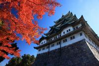 Autumn of Nagoya Castle Stock photo [2617122] Nagoya