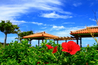 Red hibiscus and red tile roof Stock photo [2619630] Okinawa
