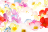 Background of flowers Stock photo [2620915] Background