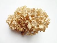 Sparassis crispa Stock photo [2701514] Mushroom