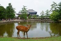 Deer of Nara Todaiji Stock photo [2703468] Deer