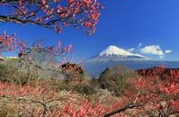 Mt. Fuji Stock photo [2703763] Iwamoto