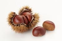 Chestnut Stock photo [2708524] Chestnut
