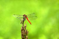 Akiacane Stock photo [2710817] Insect