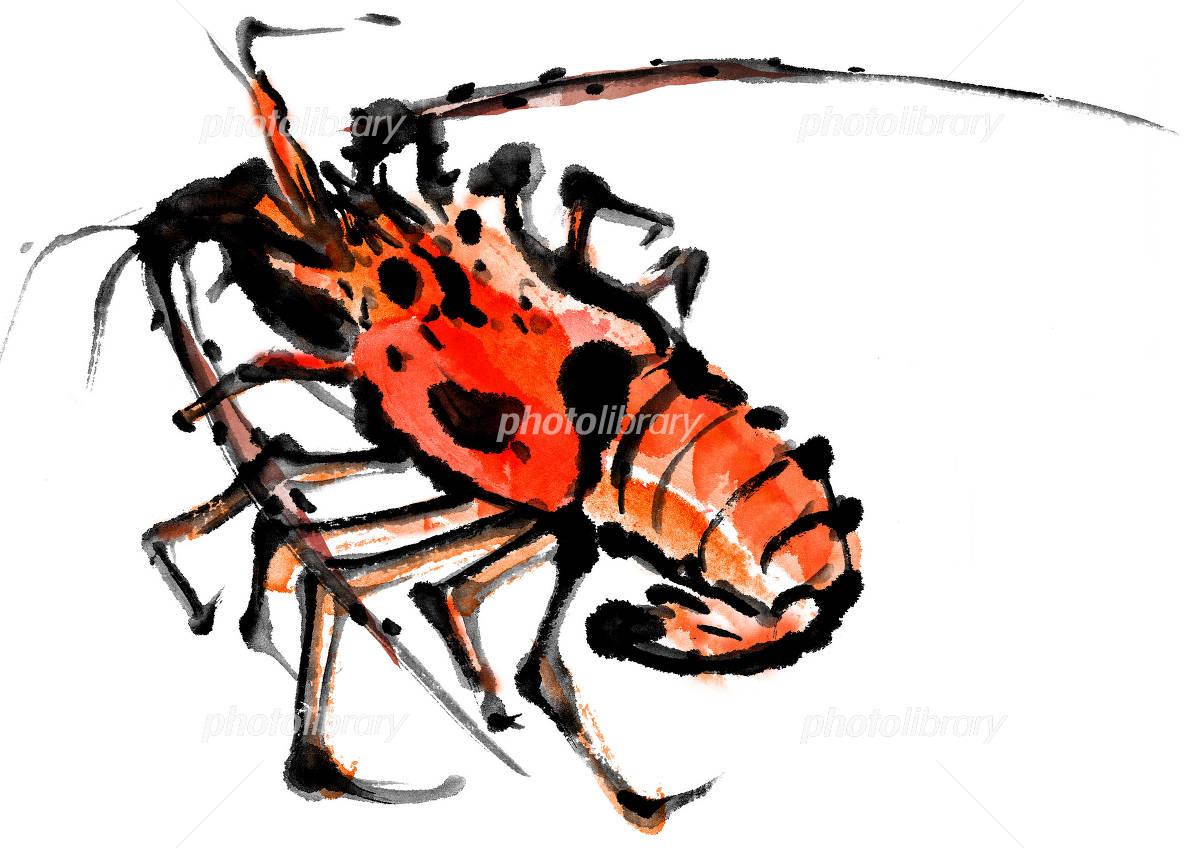 Spiny lobster イラスト素材