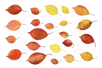 Back of the material of the fallen leaves of white background Stock photo [2789462] Fallen