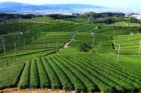 Yame Chung-Ang tea garden Stock photo [2789725] Yame