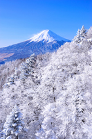 Fuji of snow stock photo