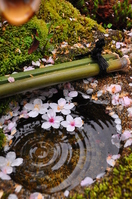 Petals of cherry blossoms floating on the water surface Stock photo [2874391] Kyoto