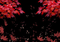 Image frame of autumn leaves [2875330] An