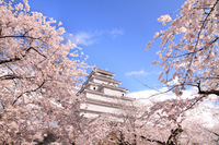 Sakura Tsuruga-jo Castle tower Stock photo [2875392] Snow