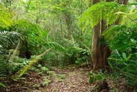 Forest of Yanbaru Stock photo [2877997] Yanbaru
