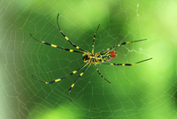 Silk spider Stock photo [2879345] Girls