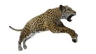Leopard [2879886] Leopard