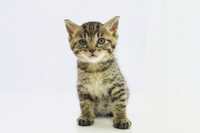 Cute kitten Stock photo [2880986] CAT