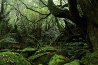 forest to Mossy Stock photo [2882318] Yakushima