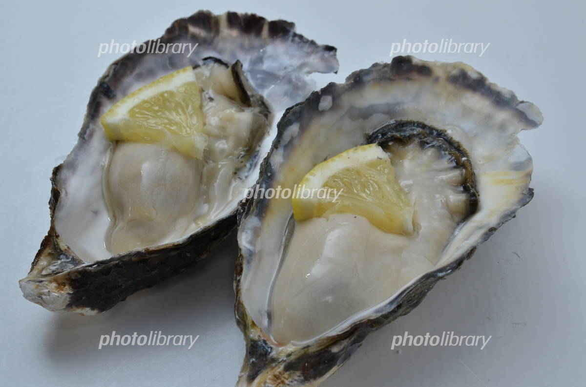 Raw oysters Photo