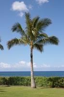 Palm tree Stock photo [2956617] Palm