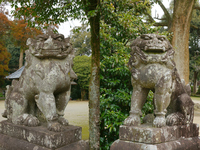 Wakamiya Shrine guardian dogs pair Stock photo [2957978] Fukuoka