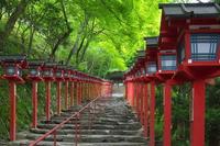 Omotesando Stock photo [2959009] Kibune