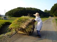 Harvesting Stock photo [2963582] Harvesting