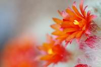 YukiAkira of flower Stock photo [3038725] Cactus