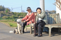 Senior and dogs Stock photo [3051754] Zinnia