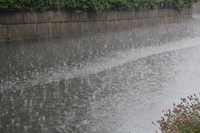 Guerrilla heavy rain Stock photo [3124257] Guerrilla