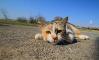 cat stare Stock photo [3130674] CAT
